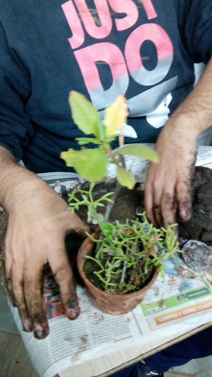curso-de-jardinera_34461801451_o