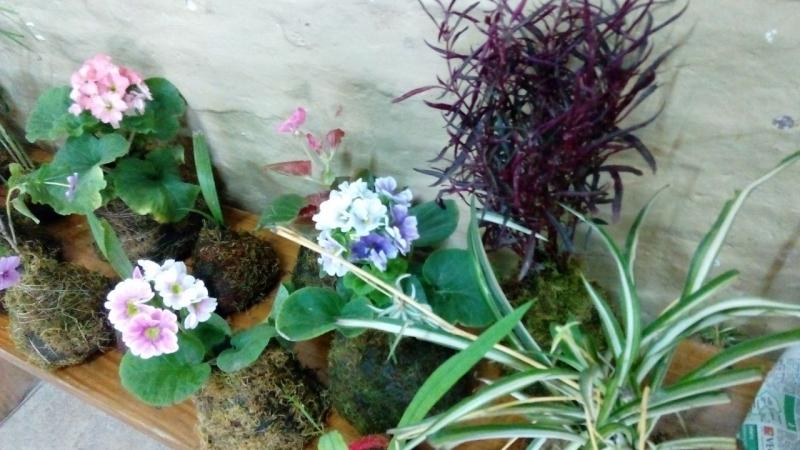 curso-de-jardinera_34551079786_o